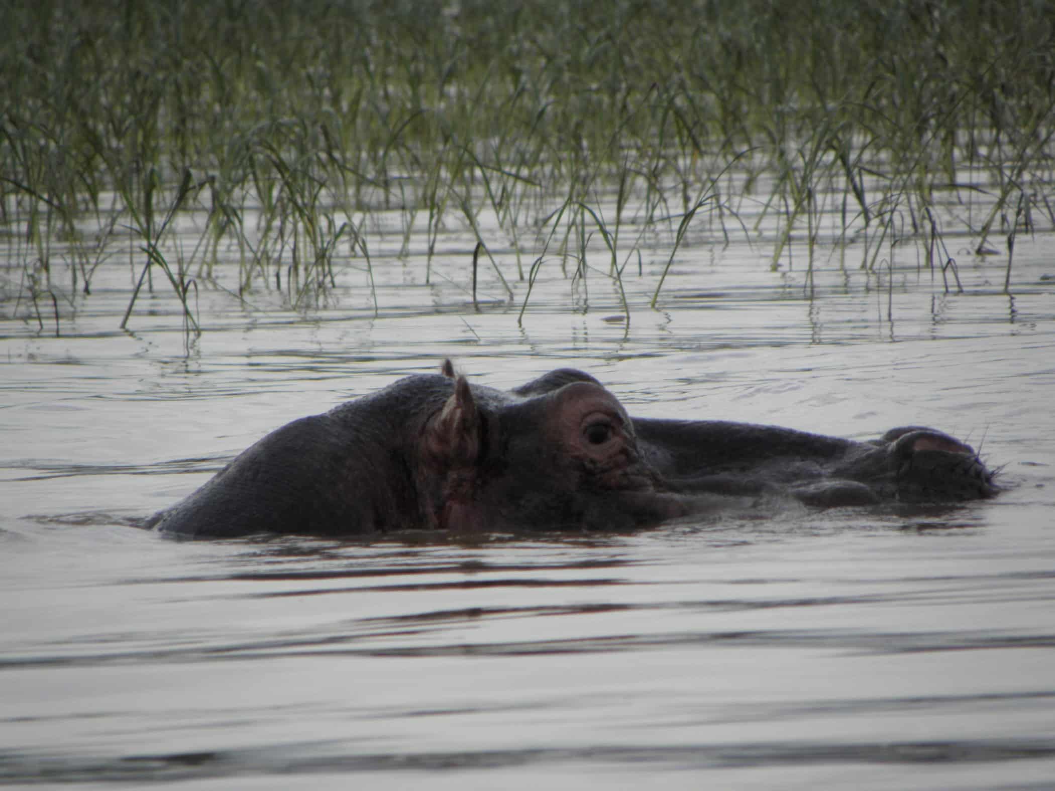 travel-ethiopia-hippopotamus