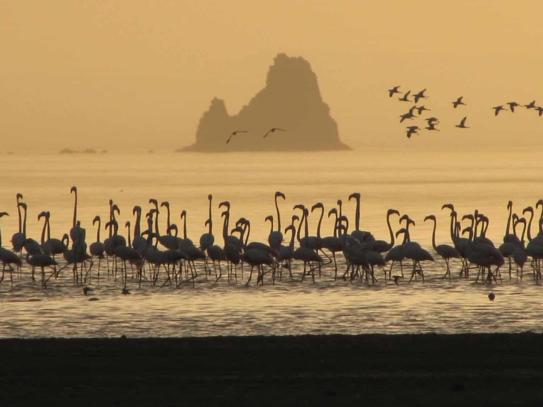tiere-jibouti-flamingos-rosen