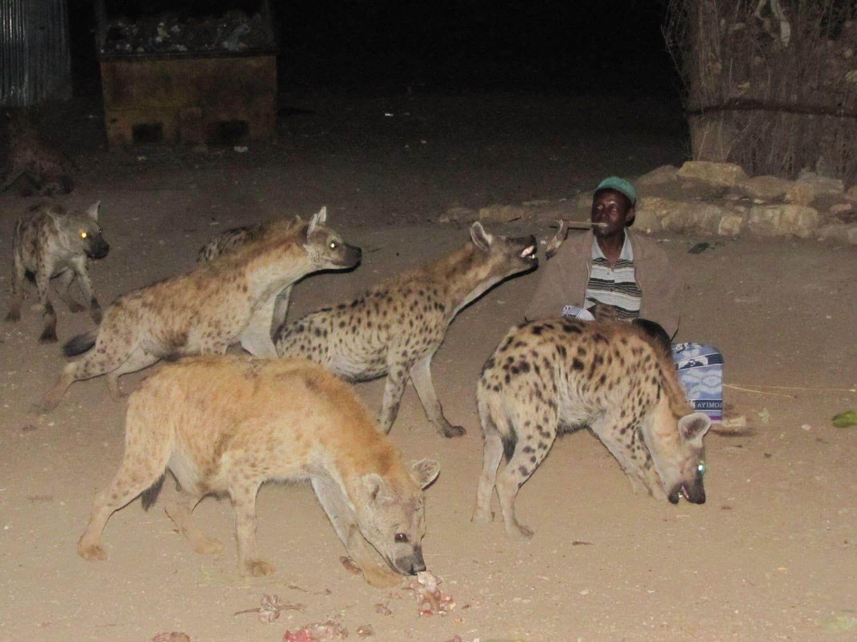 Harar-repas des-hyènes