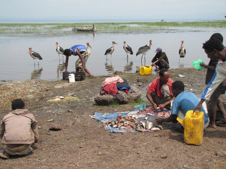 Lac-Awassa-retour-de-la-pêche