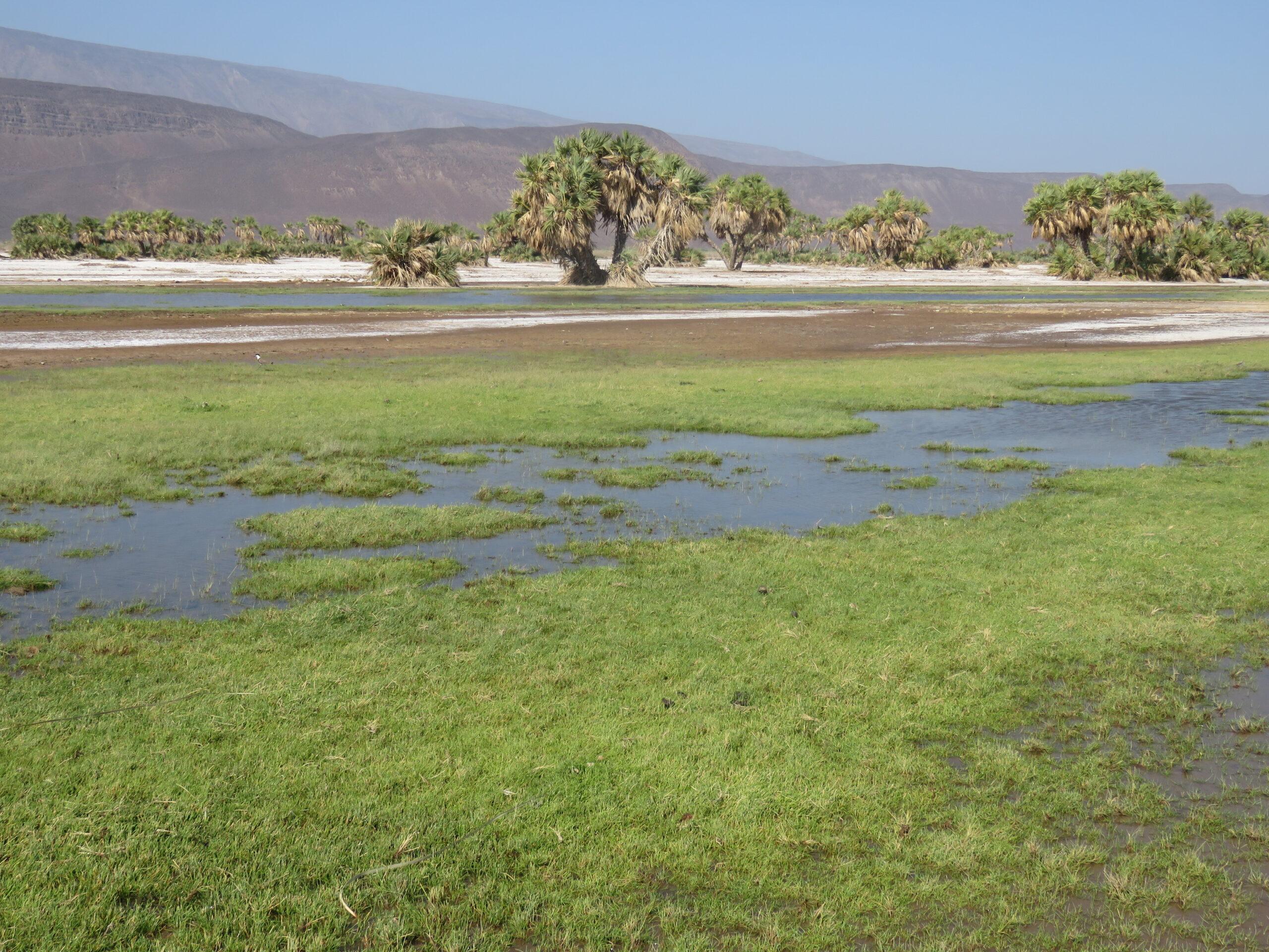Wasser und Vegetation von Allols